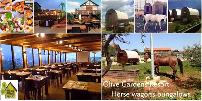 Olive Gardens Resort